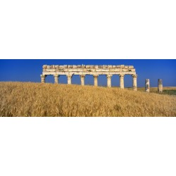 Wheat fields in Apamea in Syria